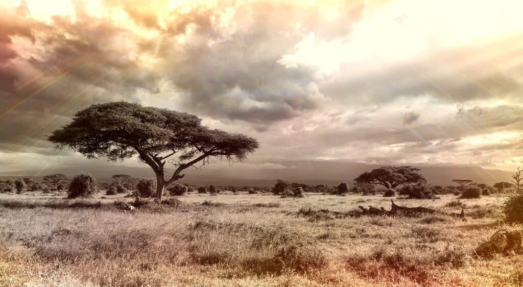 Afrika ferie