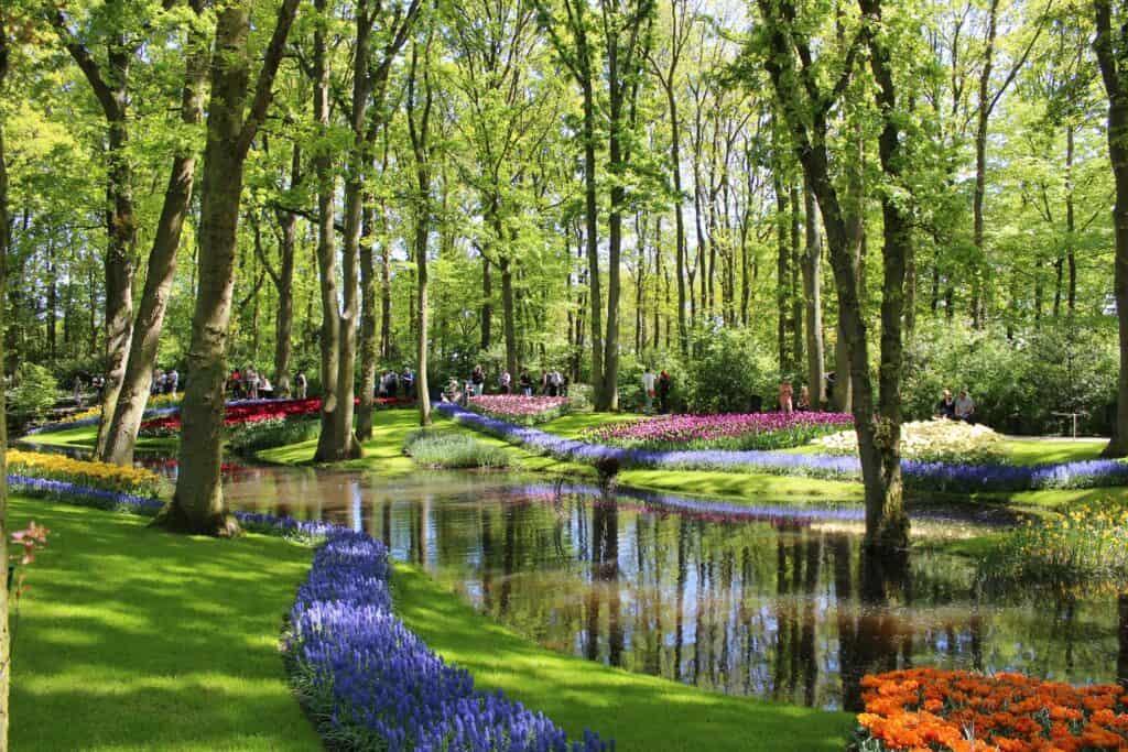 billede af keukenhof blomsterhave i amsterdam