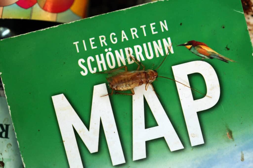 du kan finde vilde oplevelser i dyrehaven tiergarten schönbrunn i wien 1