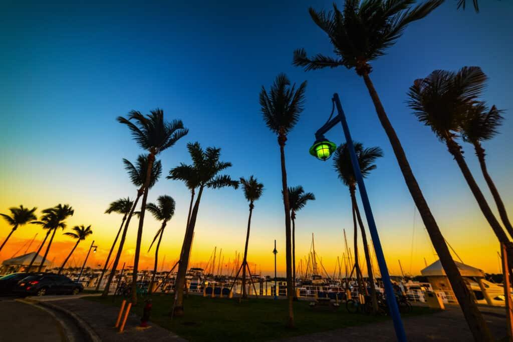 palmetræer set i silhouet i coconut grove marinaen ved sonledgang miami