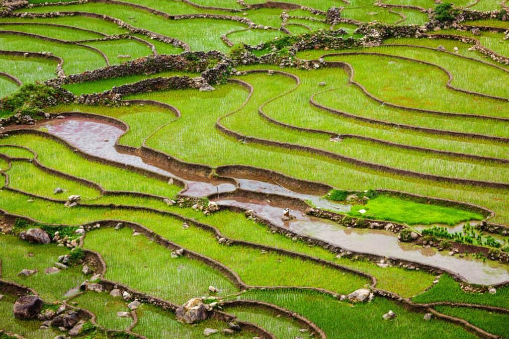 rismarker i ta van byen i muong hoa dalen. tæt på sa pa i vietnam